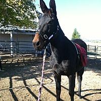 Adopt A Pet :: Josie - Greenville, CA