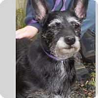 Adopt A Pet :: Boo - East Hartland, CT
