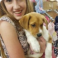 Adopt A Pet :: Marshmallow - Ogden, UT