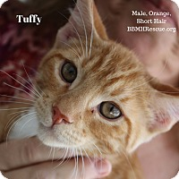 Adopt A Pet :: Tuffy - Temecula, CA