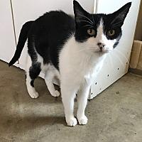 Adopt A Pet :: Anne Bancroft - Oakdale, CA