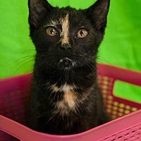 Adopt A Pet :: Crumble - Muskegon, MI