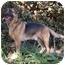 Photo 4 - German Shepherd Dog Mix Dog for adoption in Los Angeles, California - Hans von Schwartzbaum