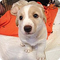 Adopt A Pet :: Charlie - Memphis, TN