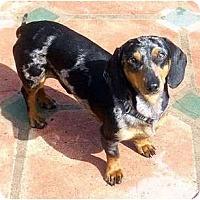Adopt A Pet :: Colton - San Jose, CA