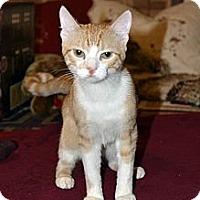 Adopt A Pet :: George - Clinton, LA