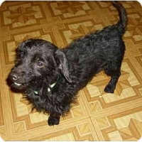 Adopt A Pet :: Waldo - Lawndale, NC