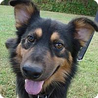 Adopt A Pet :: Graham - Erwin, TN