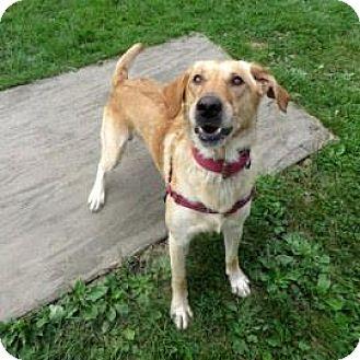 Labrador Retriever Mix Dog for adoption in Janesville, Wisconsin - Barrett