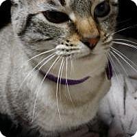 Adopt A Pet :: Izzy - Santa Cruz, CA