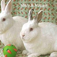 Adopt A Pet :: MAGGIE - Goleta, CA