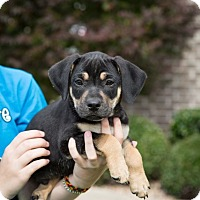 Adopt A Pet :: Jerry - Austin, AR
