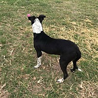 Adopt A Pet :: Bill - Seguin, TX