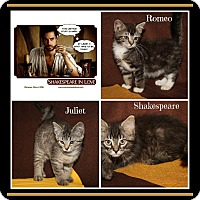 Adopt A Pet :: RomeoJulietShakespeare - Marietta, OH