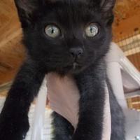 Adopt A Pet :: Matlock - Newton, KS