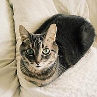 Adopt A Pet :: Dorina *declawed* - Toronto, ON