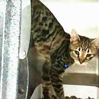Adopt A Pet :: SEBASTIAN - San Martin, CA
