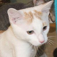 Adopt A Pet :: Emerson - Crossville, TN