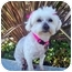 Photo 2 - Maltese/Poodle (Miniature) Mix Dog for adoption in Los Angeles, California - PORTIA