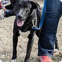 Adopt A Pet :: Marco - Cumming, GA