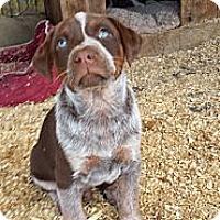 Adopt A Pet :: 3BoyPuppies - San Dimas, CA