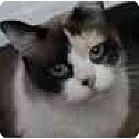 Adopt A Pet :: Harlow - Jacksonville, FL