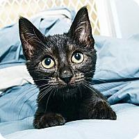 Adopt A Pet :: Rickey - New York, NY