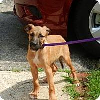 Adopt A Pet :: Sherman - South Jersey, NJ