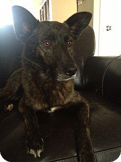 German Shepherd Dog Mix Dog for adoption in Media, Pennsylvania - GEORGIE GIRL