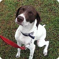 Adopt A Pet :: Macy - Streetsboro, OH