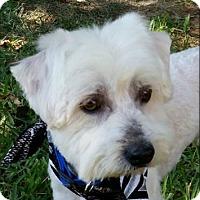 Adopt A Pet :: JAGGER - Fort Worth, TX
