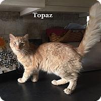 Adopt A Pet :: Topaz - Bentonville, AR