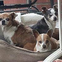 Adopt A Pet :: Fifi - Santa Ana, CA