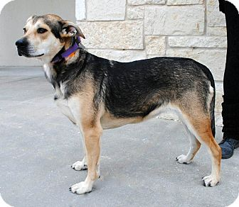 Hound (Unknown Type)/Shepherd (Unknown Type) Mix Dog for adoption in Weatherford, Texas - Missy