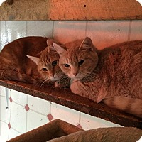 Adopt A Pet :: See below - Sanford, ME