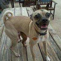 Adopt A Pet :: Ryker - Bertram, TX