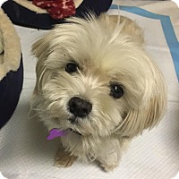 Adopt A Pet :: Buttons ~ Adoption Pending - Youngstown, OH