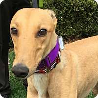 Adopt A Pet :: Tayles - Spencerville, MD