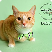 Adopt A Pet :: Declyn - Houston, TX