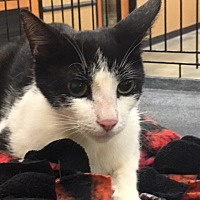 Adopt A Pet :: Elin - Alpharetta, GA