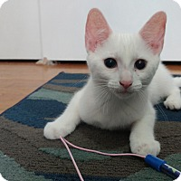 Adopt A Pet :: Alaska - Columbus, OH