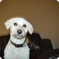 Adopt A Pet :: Sophie - Peyton, CO