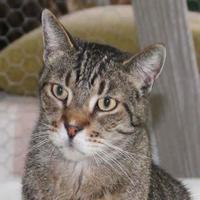 Adopt A Pet :: Tyson - Metairie, LA