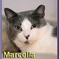 Adopt A Pet :: Marcella - Aldie, VA