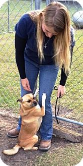 Terrier (Unknown Type, Medium)/Pug Mix Dog for adoption in Sneads Ferry, North Carolina - Pretzel