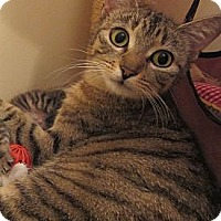Adopt A Pet :: Rosemary - Port Republic, MD