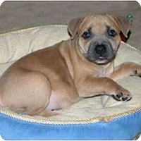 Adopt A Pet :: Willow - Minneola, FL