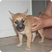 Adopt A Pet :: Dixie - Arlington, TX