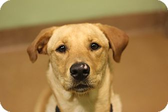 Lakeland Terrier Dog for adoption in Chicago, Illinois - Ursula