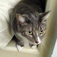 Adopt A Pet :: Pinky - Palm City, FL